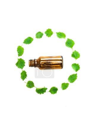 Photo pour Vue supérieure de la bouteille près du cercle des feuilles fraîches vertes d'isolement sur le blanc - image libre de droit