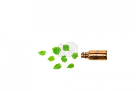 flat lay of green fresh leaves near bottle isolated on white