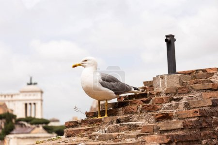 Photo pour Seagull on textured bricked building under grey sky in rome, italy - image libre de droit