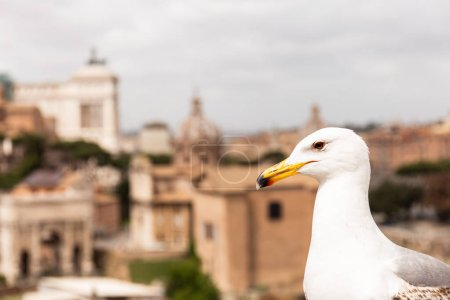 Photo for White seagull in front of buildings in rome, italy - Royalty Free Image