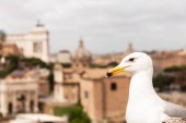 """Постер, картина, фотообои """"white seagull in front of buildings in rome, italy"""""""