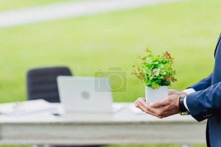 Photo pour Vue recadrée de jeune usine de fixation d'homme d'affaires dans le pot de fleur dans le stationnement près de la table - image libre de droit