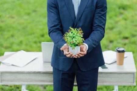 Photo pour Vue recadrée de l'homme d'affaires retenant le pot blanc avec la plante près de la table dans le stationnement - image libre de droit