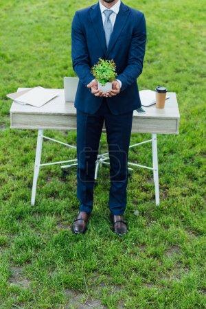 Photo pour Vue recadrée de jeune homme d'affaires présentant le pot blanc de fleur avec la plante tout en restant près de la table blanche dans le stationnement - image libre de droit