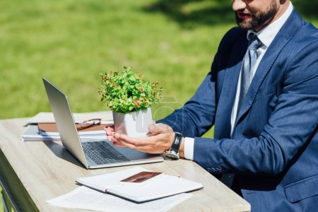 Photo for Cropped view of young businessman sitting behind table with laptop and notebooks and holding flowerpot with plant - Royalty Free Image