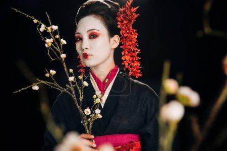 Foto de Enfoque selectivo de hermosa geisha en kimono negro con flores rojas en el pelo sosteniendo ramas de sakura aisladas en negro - Imagen libre de derechos