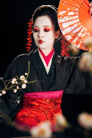 selective focus of beautiful geisha in black kimono with red flowers in hair holding hand fan and sakura branches isolated on black