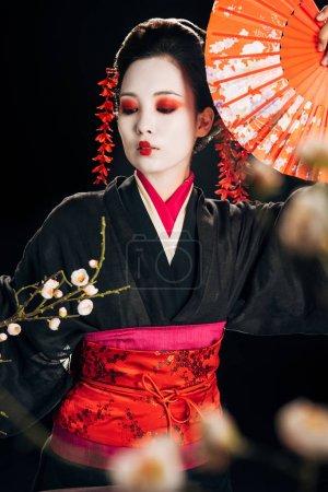 Foto de Enfoque selectivo de hermosa geisha en kimono negro con flores rojas en el pelo sosteniendo ventilador de mano y ramas de sakura aisladas en negro - Imagen libre de derechos