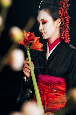 Photo for Selective focus of geisha in black kimono with red flowers and sakura branches isolated on black - Royalty Free Image