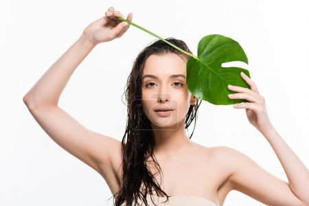 beautiful wet  young woman posing with green palm leaf with water drops isolated on white