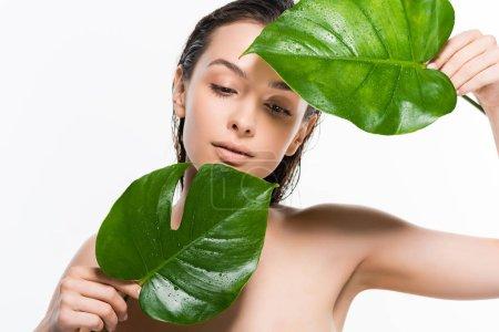 Photo pour Belle jeune femme nue humide regardant les feuilles de palmier vert avec des gouttes d'eau isolées sur blanc - image libre de droit
