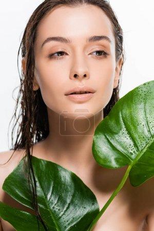 Photo pour Belle jeune femme nue humide regardant loin tout en tenant des feuilles de palmier vert avec des gouttes d'eau isolées sur blanc - image libre de droit
