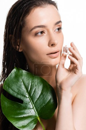 brunette wet young naked woman holding ice cube and green leaf isolated on white