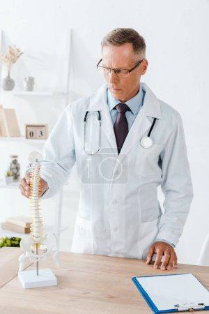 Photo pour Beau médecin dans les lunettes et manteau blanc touchant le modèle de colonne vertébrale - image libre de droit