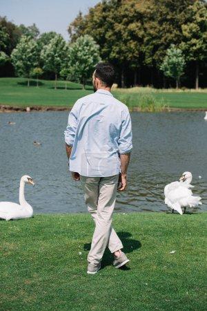 Photo pour Vue arrière de jeune homme restant près du lac avec des cygnes blancs dans le stationnement - image libre de droit