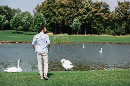 Photo pour Vue arrière du jeune homme debout près de l'étang avec des cygnes blancs dans le parc - image libre de droit