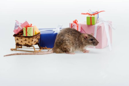 Photo for Small rat near toy sleigh and colorful presents isolated on white - Royalty Free Image