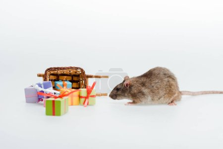 Photo for Little rat near toy sleigh and colorful presents isolated on white - Royalty Free Image