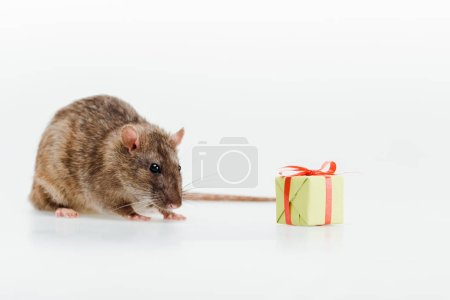 little and cute rat near toy present on white