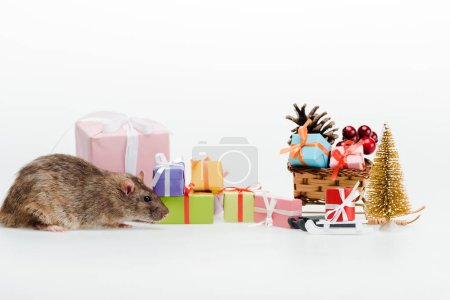 Photo for Small rat near multicolored gifts isolated on white - Royalty Free Image
