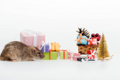 """Постер, картина, фотообои """"маленькая крыса вблизи разноцветных подарков изолированы на белом"""""""