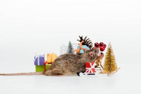 Photo pour Petit rat près de cadeaux multicolores isolés sur le blanc - image libre de droit