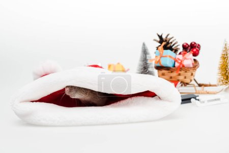Photo for Selective focus of small rat in santa hat isolated on white - Royalty Free Image