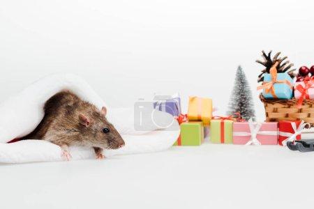 Photo pour Foyer sélectif du petit rat dans le chapeau de santa d'isolement sur le blanc - image libre de droit