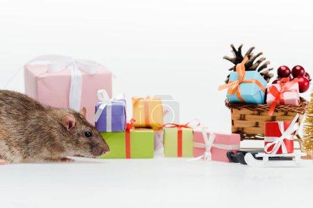 Photo pour Petit rat domestique près des cadeaux colorés d'isolement sur le blanc - image libre de droit