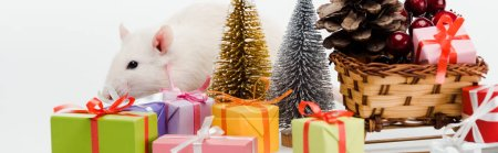 panoramic shot of domestic rat near colorful gifts isolated on white