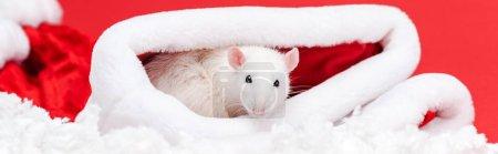 Photo pour Tir panoramique de petit rat mignon dans le chapeau de santa d'isolement sur le rouge - image libre de droit