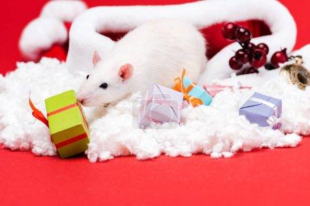 Photo pour Foyer sélectif de la souris sur le chapeau de santa près des cadeaux et des baies rouges d'isolement sur le rouge - image libre de droit
