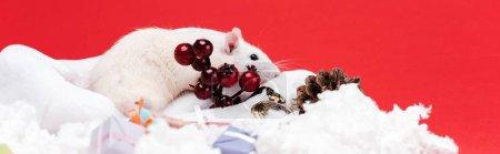 Photo pour Tir panoramique de petite souris sur le chapeau de santa près des baies rouges d'isolement sur le rouge - image libre de droit