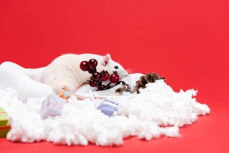 Photo pour Foyer sélectif de petite souris sur le chapeau de santa près des cadeaux et des baies rouges d'isolement sur le rouge - image libre de droit