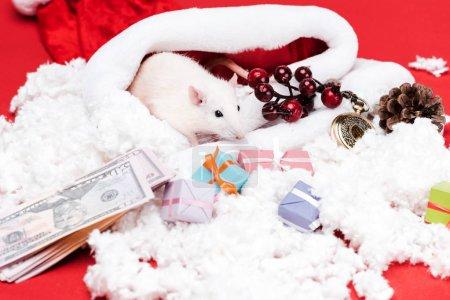 Photo pour Souris mignonne près des cadeaux et des billets de banque de dollar d'isolement sur le rouge - image libre de droit