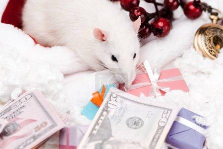 Photo pour Mise au point sélective de la petite souris près des cadeaux et des billets en dollars - image libre de droit