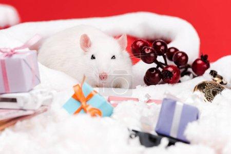 Photo pour Foyer sélectif de souris près de baies rouges et cadeaux isolés sur rouge - image libre de droit
