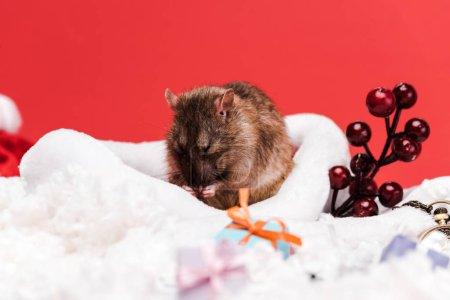 Photo pour Foyer sélectif de la souris dans le chapeau de santa près des baies rouges et des cadeaux isolés sur le rouge - image libre de droit