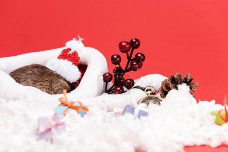 Photo pour Foyer sélectif du rat dans le petit chapeau de santa près des cadeaux et de la montre de poche d'isolement sur le rouge - image libre de droit