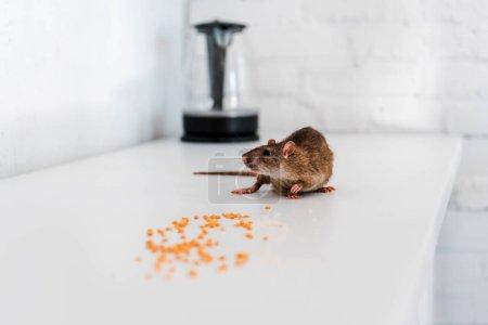 Photo pour Foyer sélectif de petits rats près de petits pois crus sur la table - image libre de droit