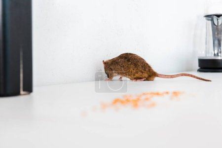 selective focus of rat near uncooked peas on table