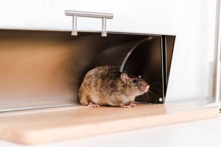 Photo pour Petite souris dans la boîte à pain dans la cuisine - image libre de droit