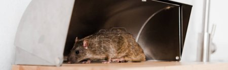 panoramic shot of small rat in bread box in kitchen