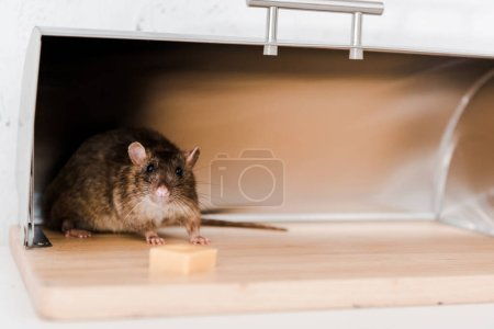 selective focus of little mouse in bread box near cube of cheese in kitchen