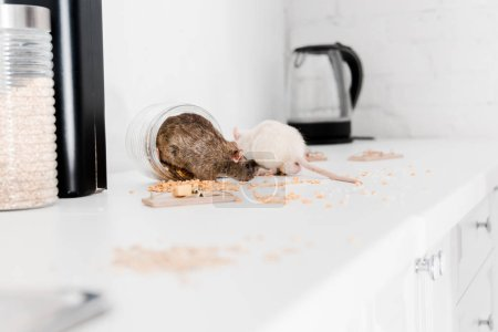 Selective focus of small rats in glass jar with ce...