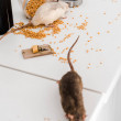 Selective focus of small rats near glass jar with ...