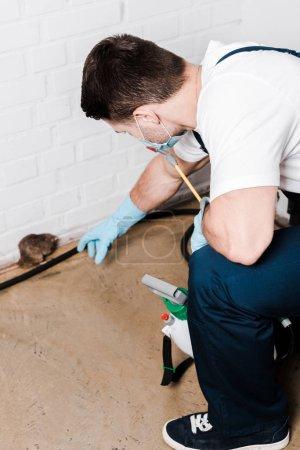Photo pour Foyer sélectif de l'exterminateur dans le rat de capture uniforme près du mur de briques - image libre de droit