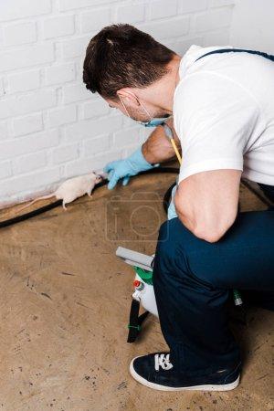 Photo pour Foyer sélectif de l'exterminateur attrapant petite souris près du mur de briques - image libre de droit