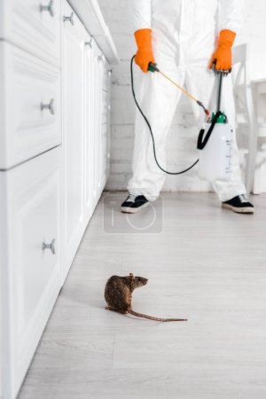 cropped view of exterminator with toxic spray in hands standing near rat on floor