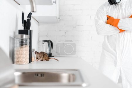 Photo for Cropped view of exterminator standing with crossed arms near rat on table - Royalty Free Image